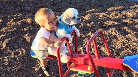 シーソーに乗る犬と子供