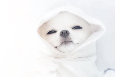 白い布に包まれて仰向けに寝ている犬
