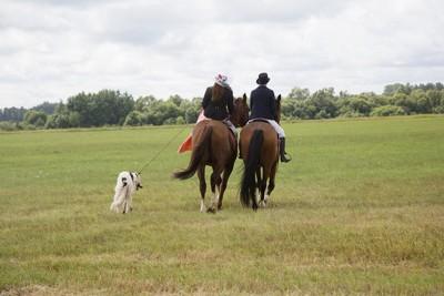 馬に乗り犬と歩いている人々