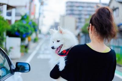白い犬を抱っこする女性の後ろ姿