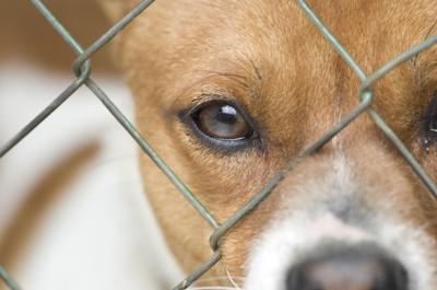 金網越しに見つめる犬の目アップ