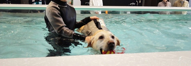 泳ぐ犬の写真