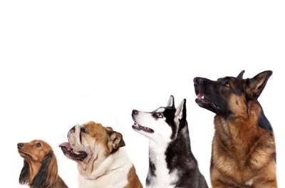 犬種たくさん