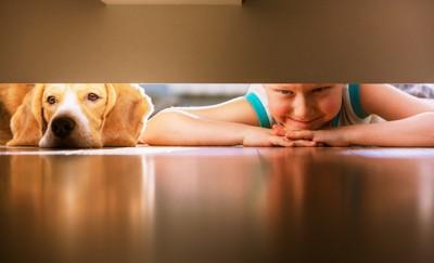 犬とフローリング