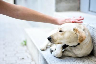 階段で丸くなる犬と撫でる人の手