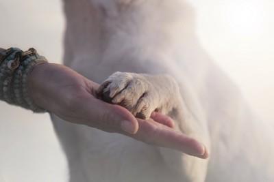 飼い主さんの手に置かれた犬の前脚