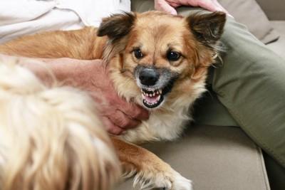 威嚇する犬と抑える手
