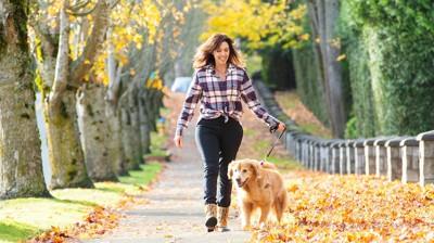 紅葉の中を散歩する女性と犬