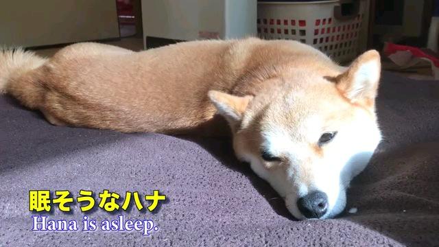 眠そう~字幕