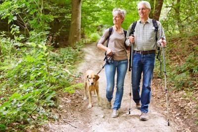 犬とハイキングするシニアのカップル