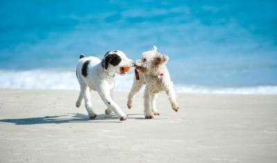 2匹の走る犬