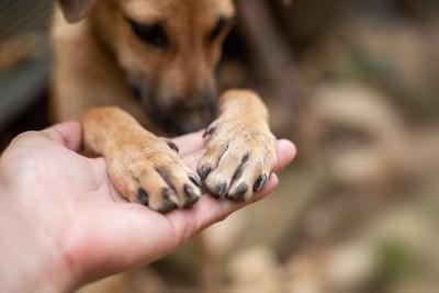 人の手に両手を乗せている犬
