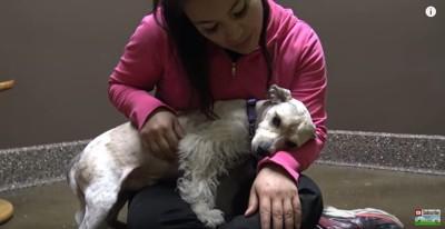 女性の膝に乗る犬