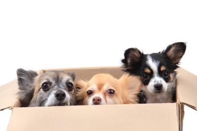 保健所から引き取られる子犬たち