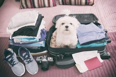 荷物の上に座っている犬