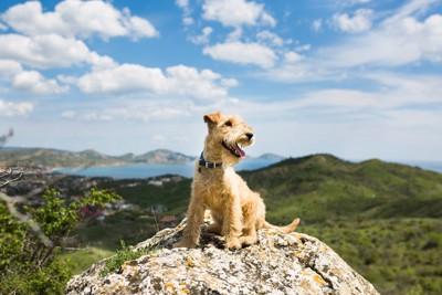 山の景色と犬