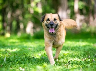 嬉しそうに駆け寄ってくる犬