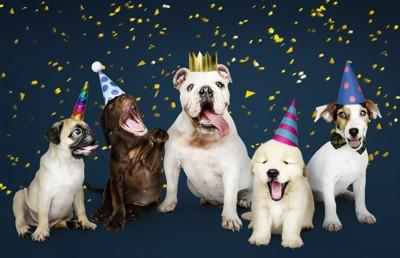 パーティを楽しむ犬達
