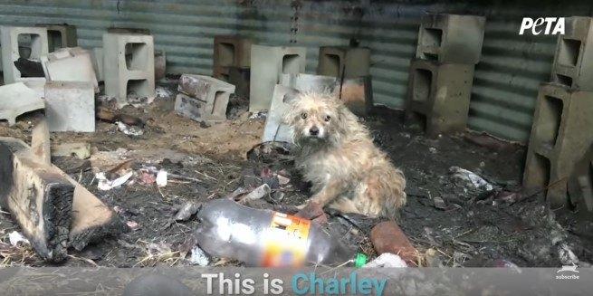 小屋の中に座る犬