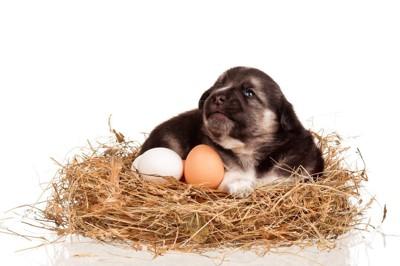 卵を温める子犬