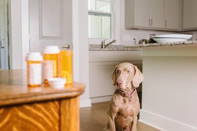 テーブルの上の薬を見る犬
