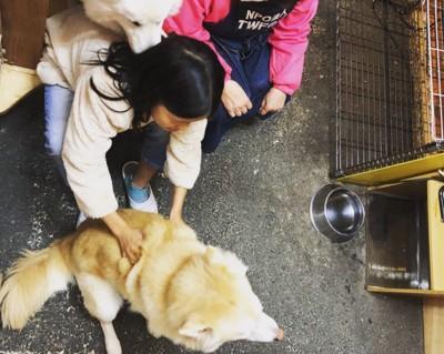娘さんと保護団体の動物