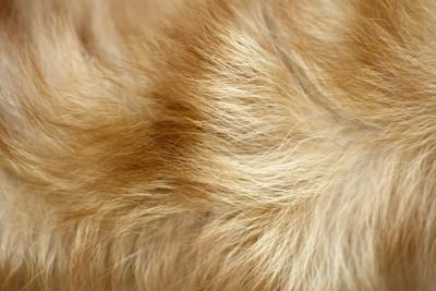 犬の毛アップ