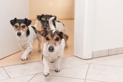 向かってくる三頭の犬