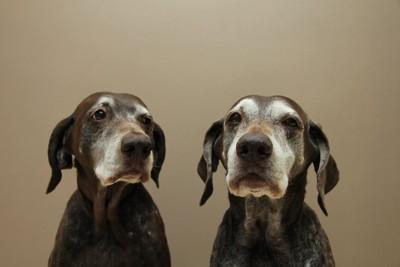 並んで座る二匹のシニア犬
