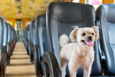 電車の座席に乗る犬