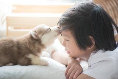 男の子のオデコを舐める犬
