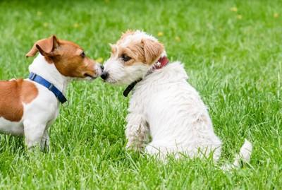 鼻を付け合う2匹の犬
