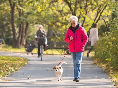 犬と散歩する年配の女性