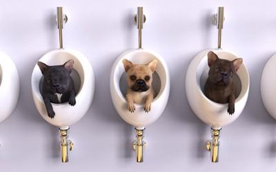 便器の中に入っている3匹の犬