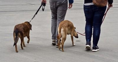 犬を連れて歩く人
