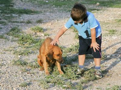 子供に触られるのを怖がる犬