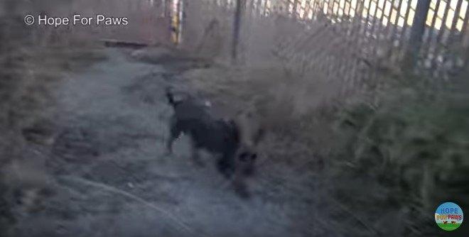 走り抜ける母犬