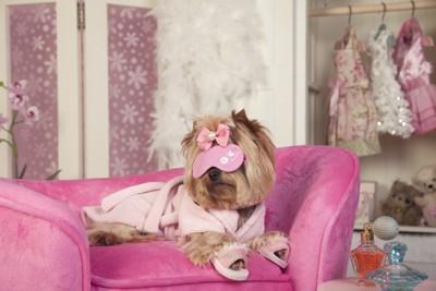 ピンクの部屋にいる犬と香水