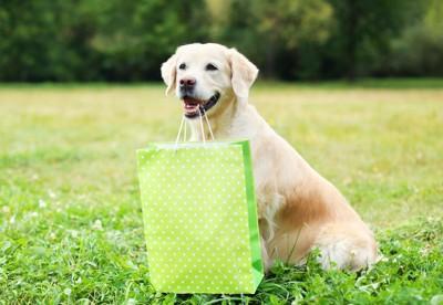 紙袋をくわえた犬