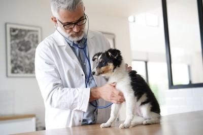 白髪のお医者さんと犬