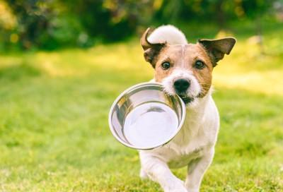 ステンレスのフードボウルを運ぶ犬