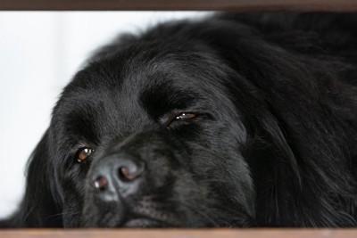 無気力な顔をしている犬