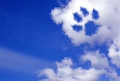 青空と肉球の形の雲
