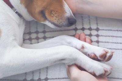 寝ている犬の手を繋ぐ