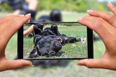 スマホで犬を撮影する女性