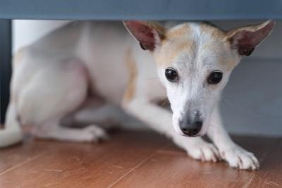 物陰に隠れる犬