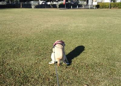犬がウンチをしている写真