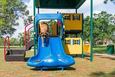 青いすべり台をすべる犬