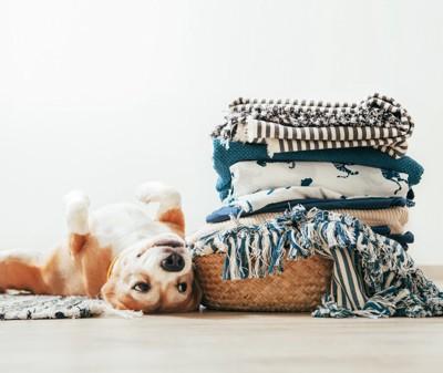 マットに寝転がる犬、横にたたんで積み上げられているマット
