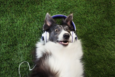 ヘッドフォンをつけた犬
